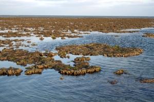 Coral reef at Mithapur